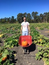 pumpkin-in-a-barrel